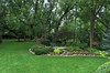 August 15 2015 Back yard<br /> <br /> Haven't posted a back yard pictures for a while.  Things are still looking pretty good even with no rain for a while. We did get some last night.