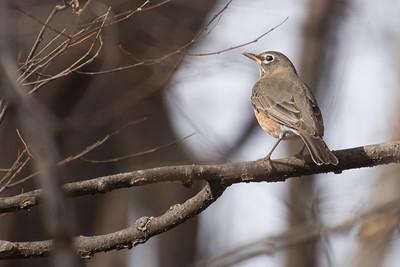 Rare bird?