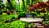 garden painting 20150517_153452