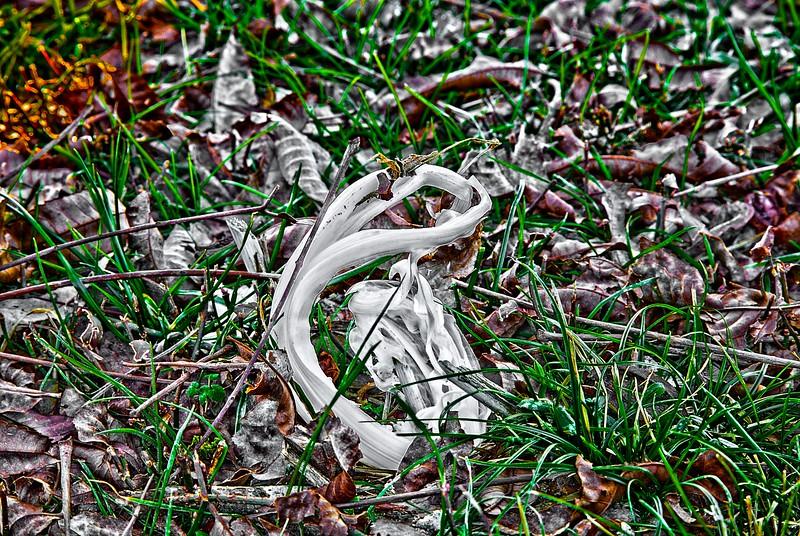Nature Ice Art II