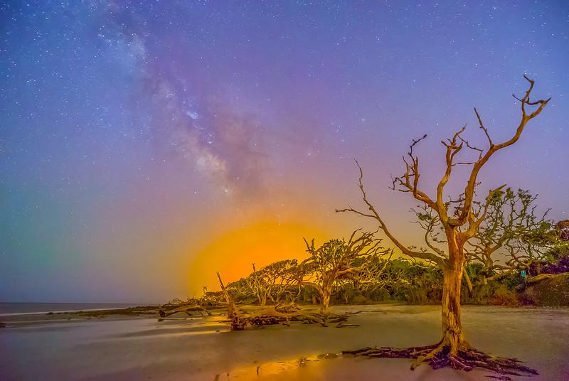 Driftwood Night Vision