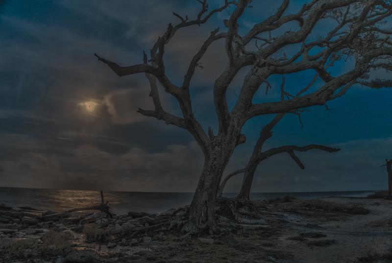 Driftwood Moon Shine