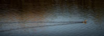 Riparine Preserve Water Ranch (02/08/2015)