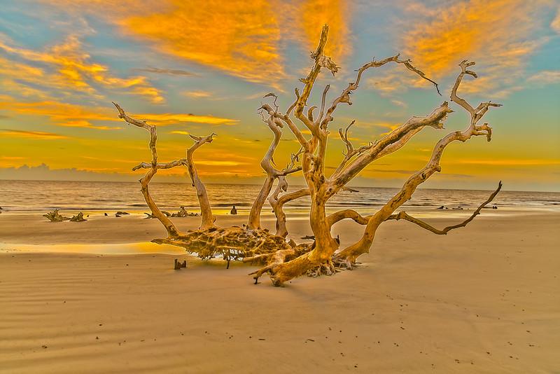 Driftwood's Last Flame