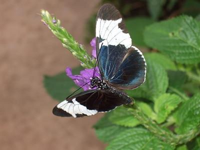 2015-03-07 Butterfly Wonderland Dawn