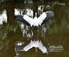 Woodstork in Wakodahatchee Wetlands