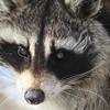 Winner, Mammals, Under 18: Daniel Ferreira