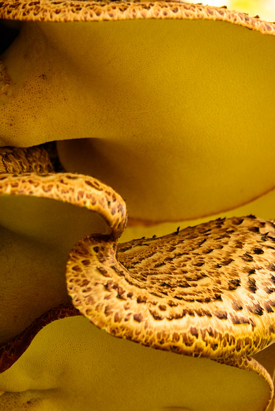 Winner, Plants and Fungi, 18 and Over: Kathryn Dannay