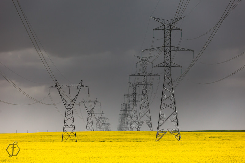 Powerlines in Yellow Canola Fields in a Storm