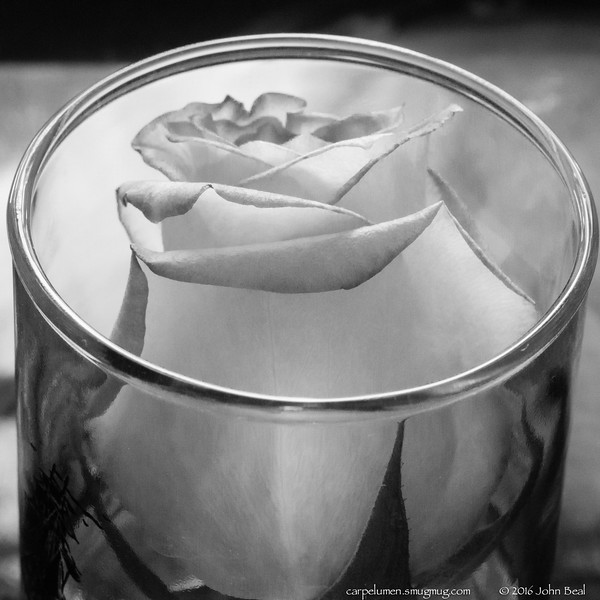 (1 Jul 2016)<br /> <br /> Ah no, it's always just my luck to get<br /> One perfect rose.<br />     - from One Perfect Rose, Dorothy Parker<br /> <br /> f/11, 1/40s, iso 1600.