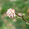 (15 Mar 2016)<br /> <br /> blueberry blooms (i'm glad i was writing that and not saying it).<br /> <br /> f/8, 1/80s, iso 250.