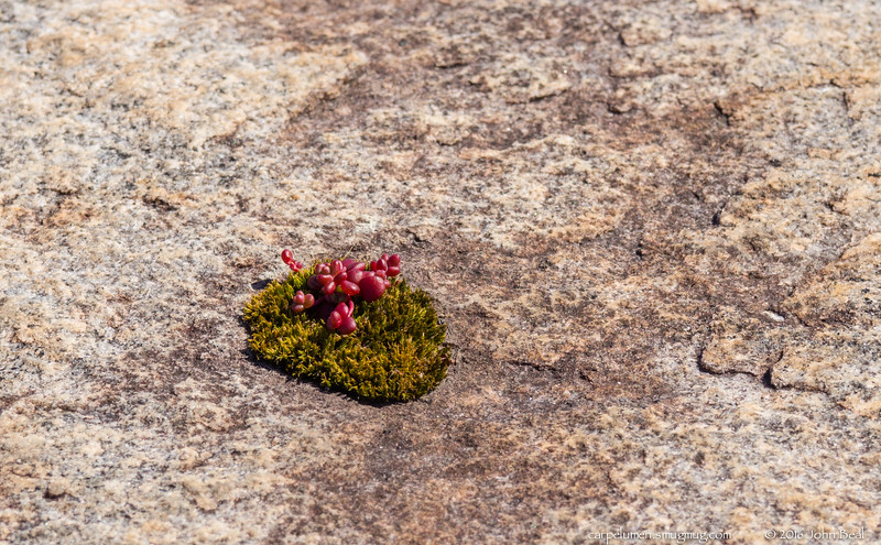 26 Feb 2016<br /> <br /> resiliency of nature.<br /> <br /> a hole in the gneiss, placed there to 'encourage' a clean split for harvesting, collecting enough nourishment for the moss to grow, which provides an anchor for the diamorpha.<br /> <br /> f/11, 1/320s, iso 200.