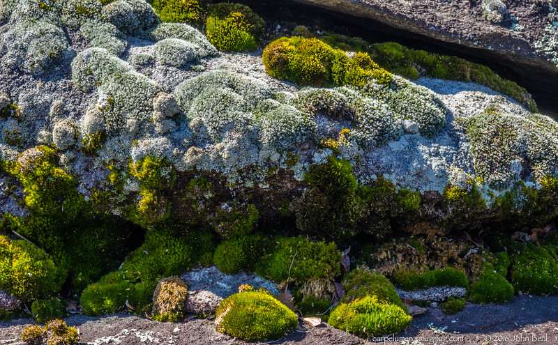 (3 Mar 2016)<br /> <br /> moss covered gneiss, arabia mountain.<br /> <br /> f/11, 1/80s, iso 320.