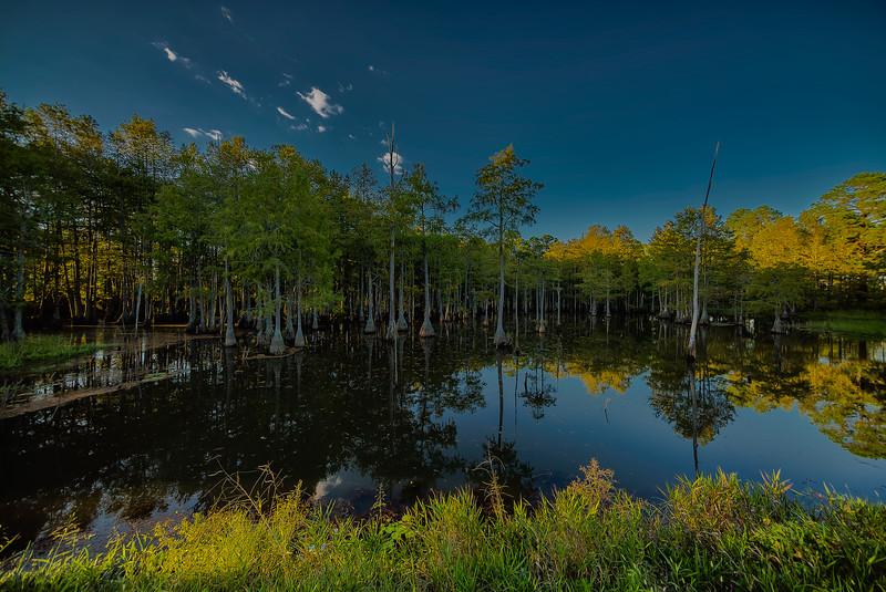 Roadside Cypress Pond