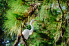 Great Egret Shadow Side