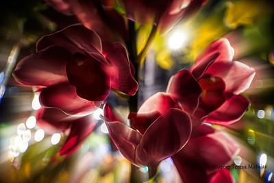 Day 356 - Flower Friday - Happy Birthday Shell!