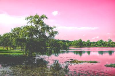 Day 361 - Softer Landscape