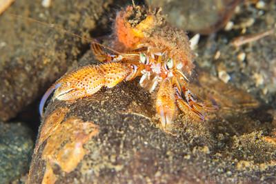 Crab - Redondo in Des Moines, Washington