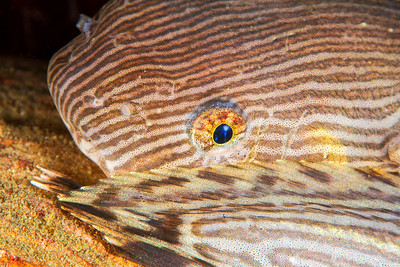 Snailfish - Redondo in Des Moines, Washington