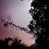 Bobinsana by moonlight