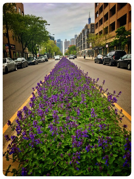 Madison Street - West Loop, Chicago