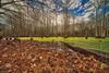 Southern Cypress Swamp