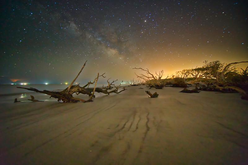 Foggy Driftwood Beach