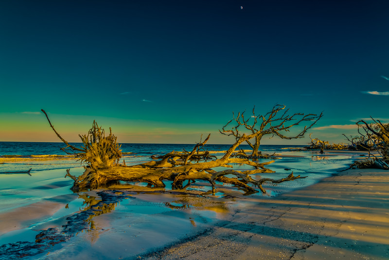 Driftwood Golden Hour
