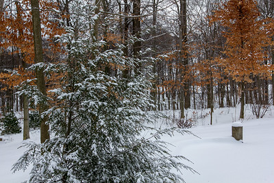 2018-02-07 Snow Day
