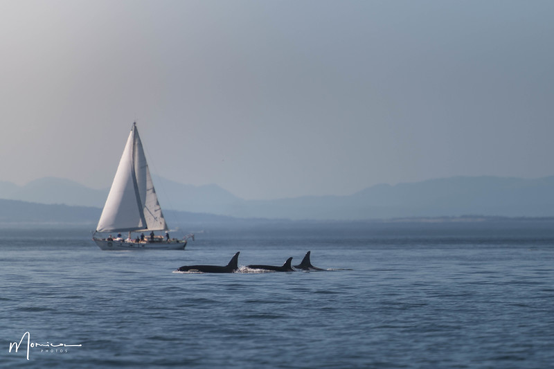 2018-07-14 - Whale Watching-1825_edit