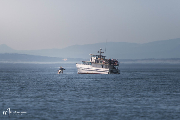 2018-07-14 - Whale Watching-2224_edit