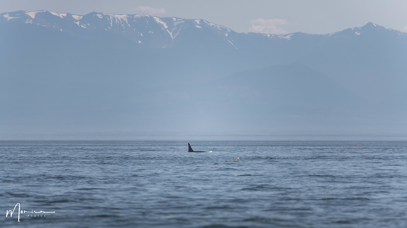 2018-07-14 - Whale Watching-2433_edit