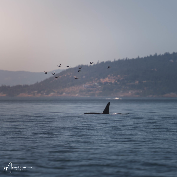 2018-07-14 - Whale Watching-1920_edit