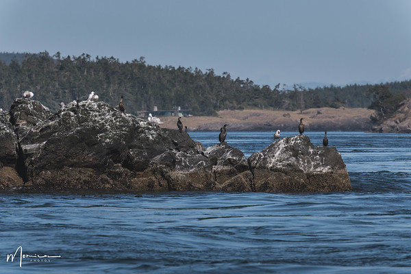2018-07-14 - Whale Watching-2462_edit