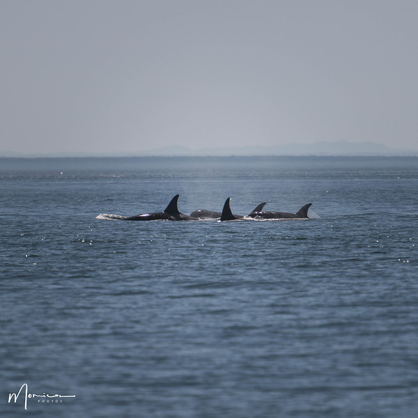2018-07-14 - Whale Watching-1803_edit