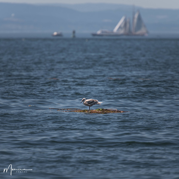 2018-07-14 - Whale Watching-1574_edit