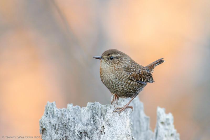Winner, Birds, Under 18: Davey Walters