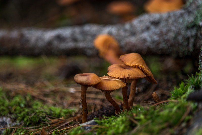 Winner, Plants & Fungi, Under 18: Sean Henderson