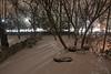 backyard IMG_8620