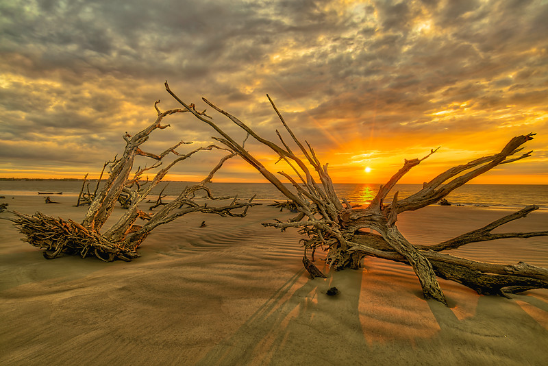 Sunrise on Driftwood Beach Jekyll Island State Park Ga.. The morning sun warms the sand and old wood.