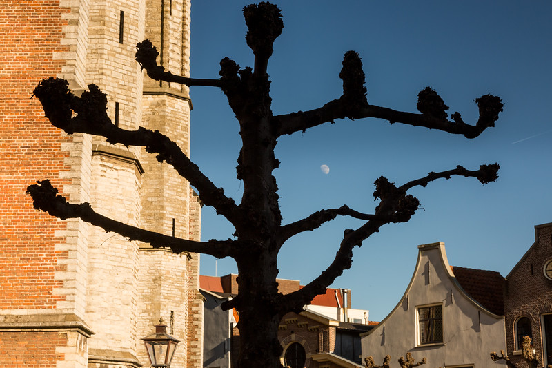 Part of a large church behind a pruned tree.