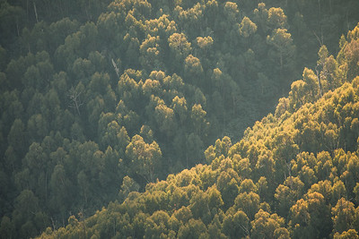 Boulder Creek (North Branch)