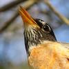 Winner, Birds, Under 18: Jack Ferrero