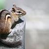 Winner, Mammals, Under 18: Aranya Karighattam