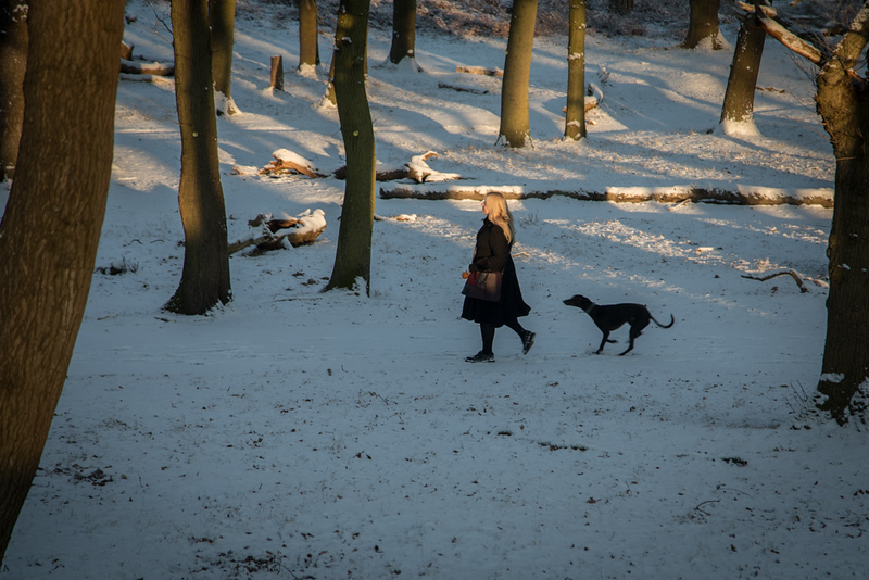 Richmond Park in the snow