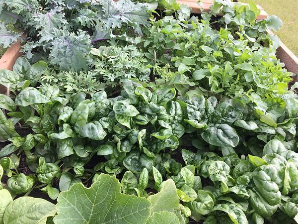 Spinach, Kale, Arugula