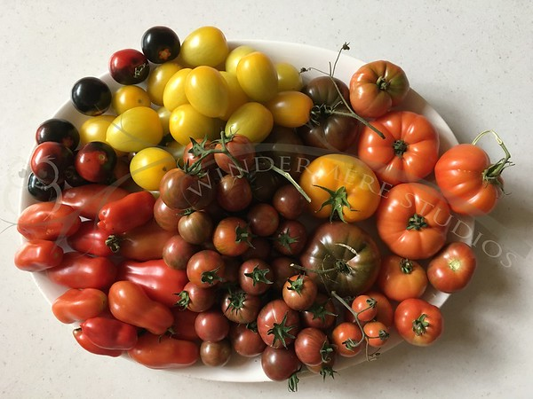 2019 Tomatoes