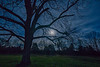 Tree Silhouetted by Full Moon