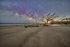 Driftwood Beach MW Gega AI