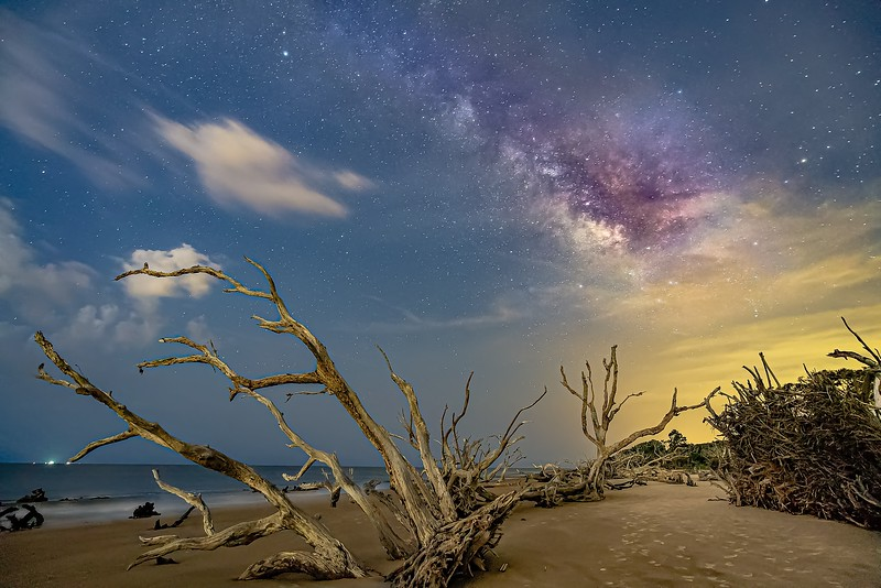 The Old Driftwood Beach